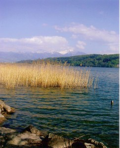 Bollingen reeds